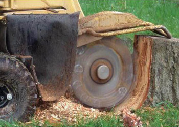 stump_grinding_removal